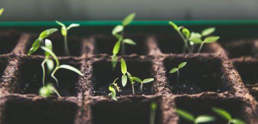 Pflanzentherapie hilft, den Glühlampe schlichtweg zu beziehen